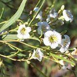Natural Herbs That Give You Euphoria – Botanical Shaman