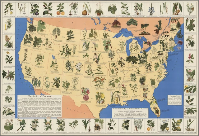 Psychoactive Plants That Are Legal in the United States – Botanical